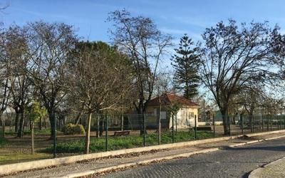 Iniciativa de limpeza e manutenção da Floresta Ripária da Ribeira de Santarém