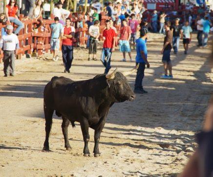 Festas do Foral, dos Toiros e do Fandango de 8 a 17 de Junho em Salvaterra de Magos