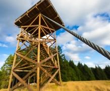 Município de Sardoal promove Programa de Voluntariado para a Floresta