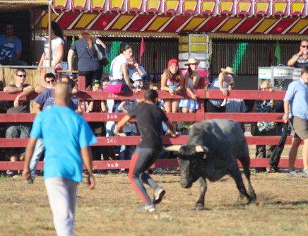 Festas do Porto Alto arrancam já este fim-de-semana com touros bravos, sardinhada e música