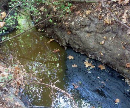 CDS questiona Governo sobre o que foi feito para resolver poluição na ribeira da Boa Água