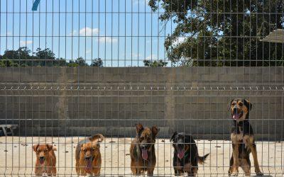ASPA: Abandono de animais continua à revelia da lei