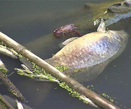 PS questiona Governo sobre poluição na ribeira da Asseca