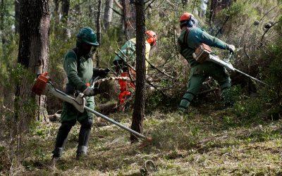 Metade dos terrenos identificados no concelho de Santarém por limpar