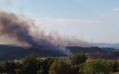 """Incêndios: Dois fogos de """"grandes dimensões"""" em Santarém obrigam ao corte da A15"""