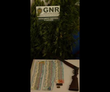 Almeirim –  Detido por tráfico de estupefacientes e posse ilegal de arma