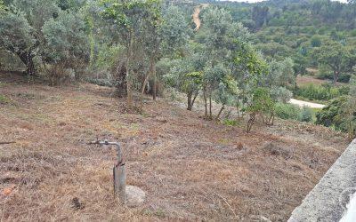 CHAMUSCA: Maioria dos proprietários notificados limparam terrenos, município vai actuar nos restantes