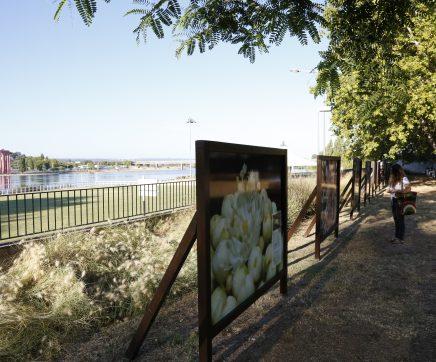 Exposição Parque em Macro – Serralves em Abrantes