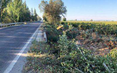 Câmara de Almeirim abate árvores em más condições e vai replantar 150