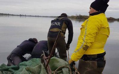 GNR apreende meixão pescado ilegalmente no Cartaxo e Salvaterra