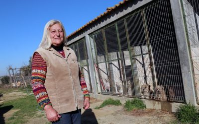 Dona de 16 cães lança apelo para encontrar novo lar para os animais (VÍDEO)