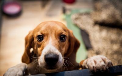 Governo aprova verbas para centros de recolha animal de Almeirim e Alpiarça