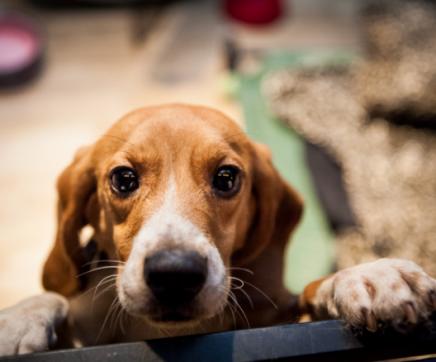 Canil Intermunicipal promove campanha de adopção de animais