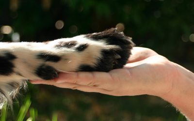 ESES promove Workshop sobre os Direitos dos Animais