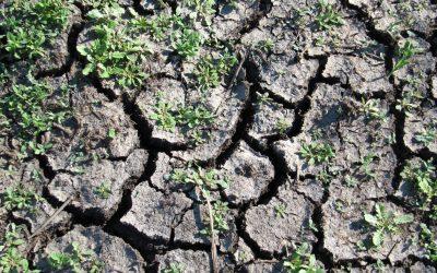Seguros devem abranger seca e fundos mutualistas podem ser resposta para produção de milho