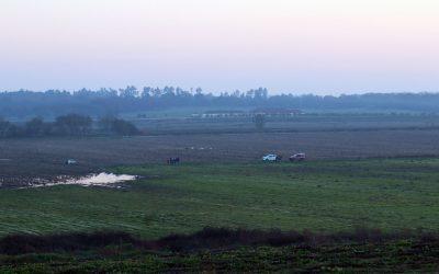 Homem encontrado morto nos campos agrícolas de Muge