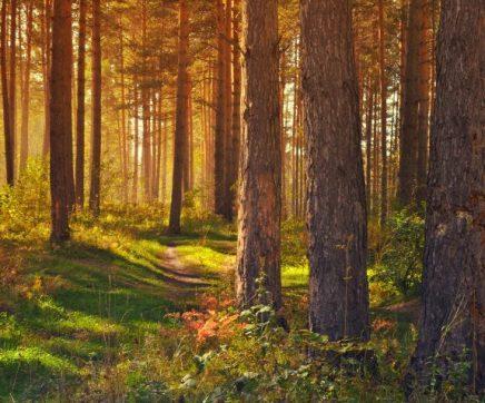 """Exposição """"Florestas para o Futuro"""" nas 13 bibliotecas da região"""