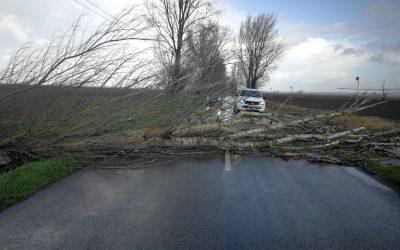 Dezenas de árvores caem na região e provocam danos