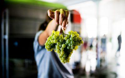 Governo reforça para 18 milhões de euros apoios ao sector dos vinhos