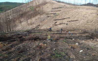 Município de Ferreira do Zêzere planta mais de sete mil árvores