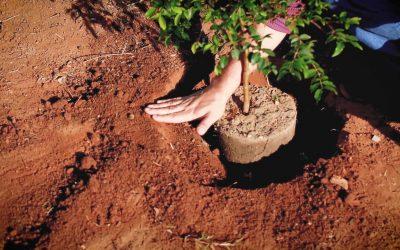 Campanha promove troca de plástico por árvores de fruto em Almeirim
