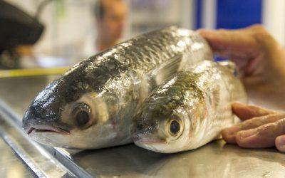 Peixe defumado e pastéis de nata vegan vencem concurso