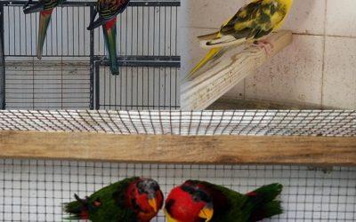 Identificado por posse ilegal de 13 aves exóticas