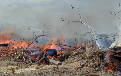 Governo prolonga proibição de queimadas até quinta-feira