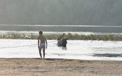 Festa de Verão Eh!Toiro regressa à Chamusca de 5 a 7 de Julho