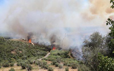 """Proteção Civil alerta para aumento """"muito grande"""" do risco de incêndio até terça-feira"""