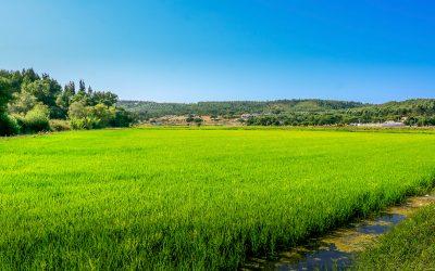 Trail das Famílias 2019 na Chamusca passa nos arrozais de Ulme