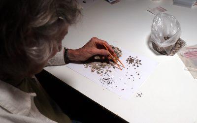 Investigadores da Universidade do Algarve estudam Concheiros de Muge