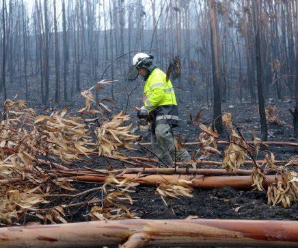 Na região, só Sardoal se candidatou ao financiamento para limpeza da floresta