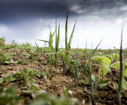 Governo alarga apoio aos agricultores de dez concelhos da região afectados pela seca