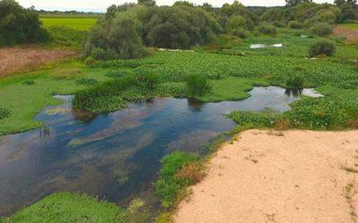 """Movimento insiste na """"urgência"""" da limpeza diária de jacintos no rio Sorraia"""