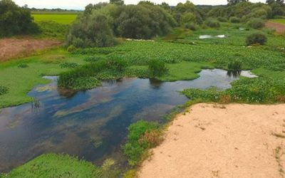 Movimento insiste na limpeza diária de jacintos no rio Sorraia