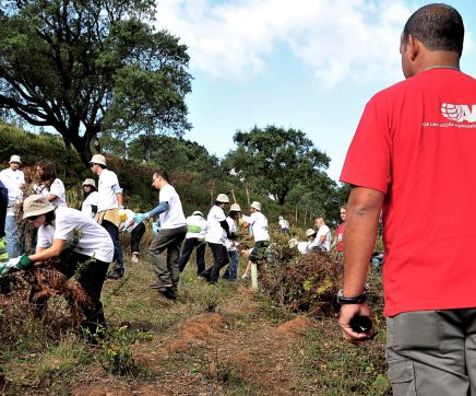 Projecto Ecoética da AMI já plantou mais de 20 mil árvores
