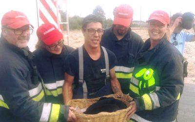Bombeiros de Salvaterra de Magos resgatam seis cães presos em conduta