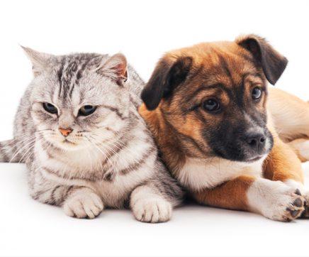 Chamusca alarga campanha de esterilização a animais de companhia domésticos