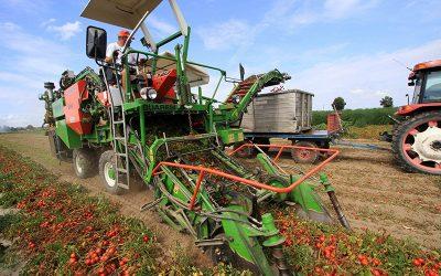"""Associação de produtores de tomate reclama """"apoios excepcionais"""" para campanha """"difícil"""""""