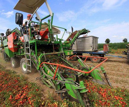 """CAP pede """"bom senso"""" na fiscalização da proibição de trabalhos agrícolas"""