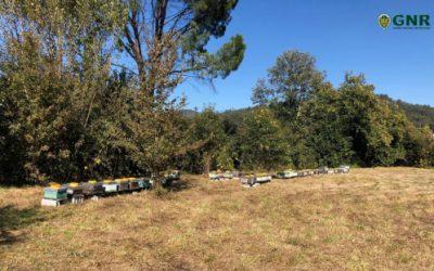 GNR de Arouca apreende 49 colmeias furtadas em Alcanena