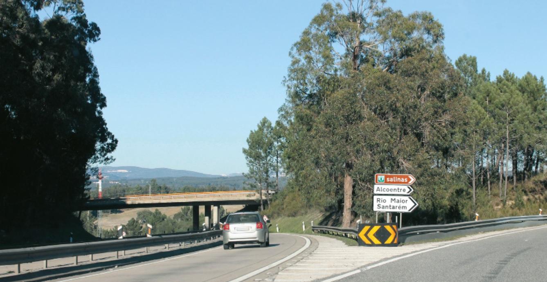 Poda e abate de árvores condiciona trânsito no IC2