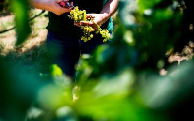 Vinhos do Tejo mostram-se em dose dupla em Lisboa