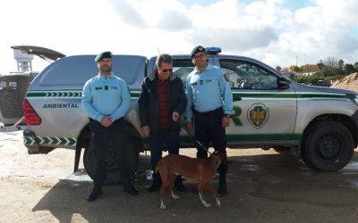 GNR recupera dois cães furtados e alvo de maus tratos