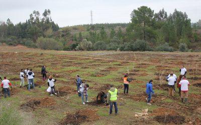 Grupo de voluntários realiza acção de arborização no Parque do Bonito