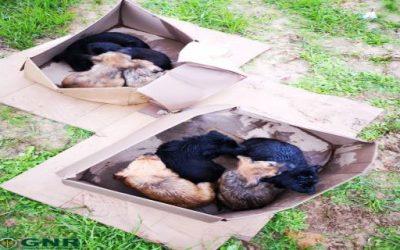 GNR resgata oito cachorros na berma da EN 10