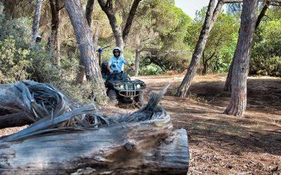 Três homens detidos por caça ilegal ao javali