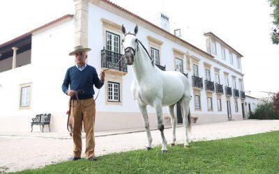 """""""A Golegã é berço de toda a tradição e de toda a modernidade do mundo equestre"""""""