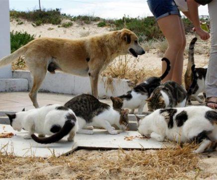 Criado grupo de trabalho para lidar com animais errantes no Cartaxo